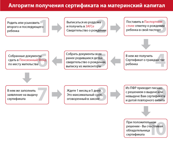 Схема получения сертификата на материнский капитал