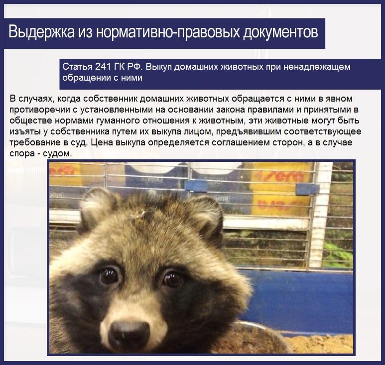Статья 241 ГК РФ. Выкуп домашних животных при ненадлежащем обращении с ними